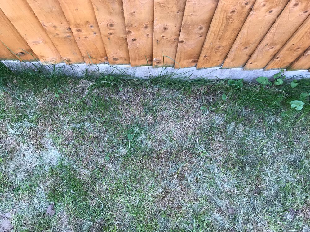 how to dig up grass